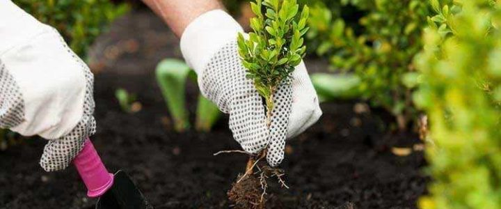 Plant Nurseries in Delhi