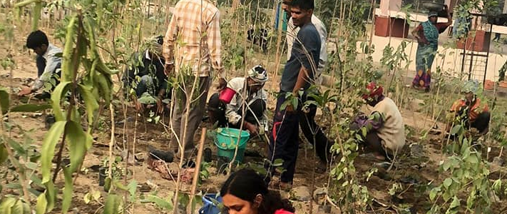 Miyawaki Forest Planted in Tilak Nagar by EcoSikh NGO