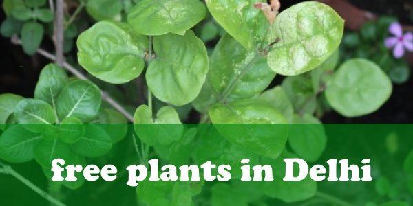 Free Plants in Delhi | Nurseries | Saplings | Space for Plantation