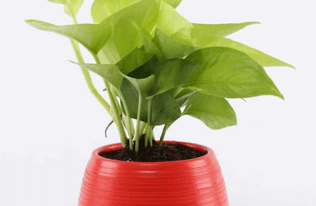 5 Indoor Plants to Boost Productivity While Working From Home