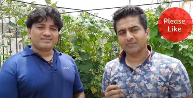 Terrace Gardening Green Talk by Sandeep Kalshan